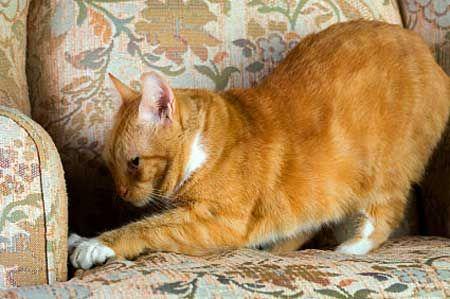 Захист меблів від кішок.