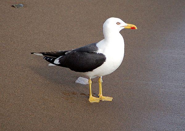 Захисна функція протекційного забарвлення (головним чином у птахів)