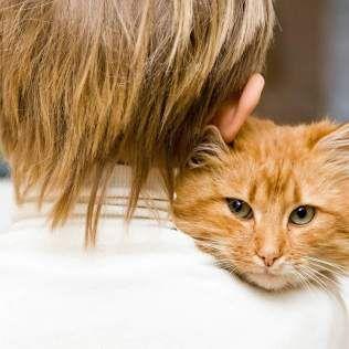 Жорстокий світ людей або історія про один безпритульного кота