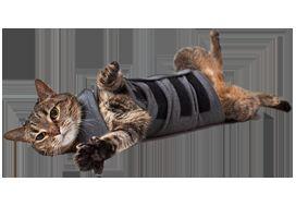 Жилет для кішки