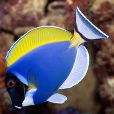 Живородящі акваріумні рибки: види, особливості змісту