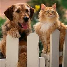 Тварини - лікарі і цілителі. Користь зоотерапии