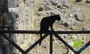 Тварини - надійні прогнозисти катаклізмів