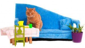 Життя домашніх кішок