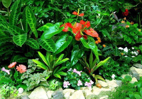 Зимовий сад в квартирі своїми руками фото