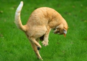 гра кішок