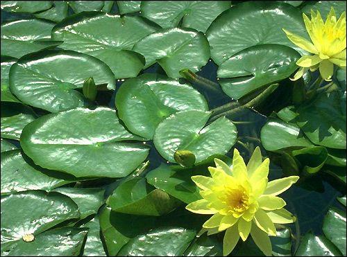 Значення рослин в акваріумі