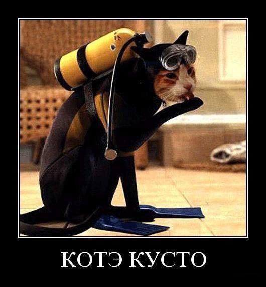 Коти - знаменитості