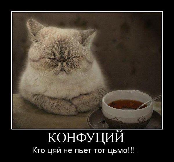 Знаменитості - коти і кішки