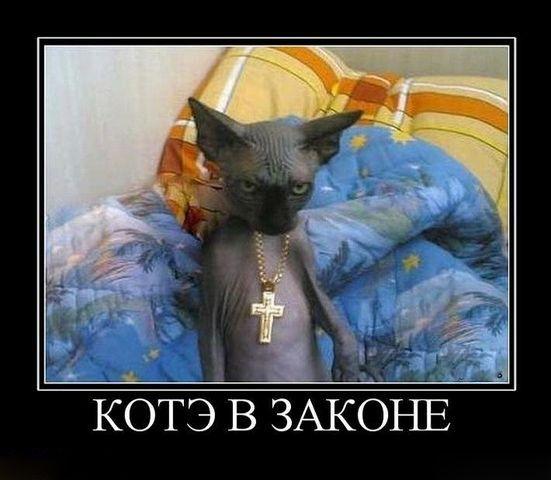 коти-знаменитості