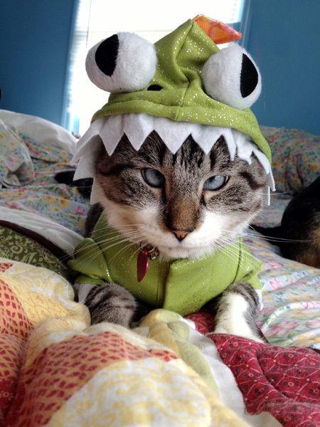 Косоокий кіт по кличці Спанглс