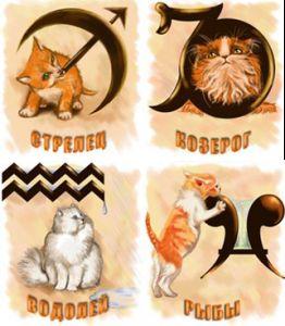 Зірки про кішок